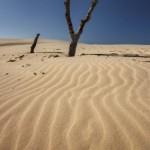 Polish dunes